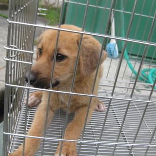 家族募集!!2~5カ月の子犬(男の子)たちです。
