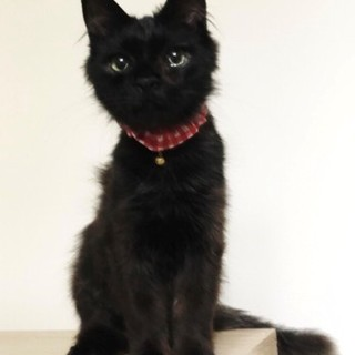 ふさふさ尻尾の黒猫