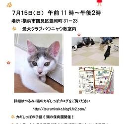 横浜 つるみ・猫のカギしっぽ 子猫のプチ譲渡会 (JR鶴見駅歩5分)室内開催