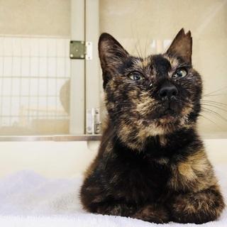 地震の被害にあった猫のおばあちゃん