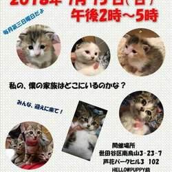 猫の里親会@芦花公園 サムネイル1