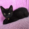 黒猫あらた君と八割れホノカちゃんの仲良し兄妹♬ サムネイル3