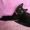 黒猫あらた君と八割れホノカちゃんの仲良し兄妹♬ サムネイル5