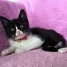 黒猫あらた君と八割れホノカちゃんの仲良し兄妹♬ サムネイル6