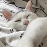 実家にお迎えできる猫ちゃん希望です♡