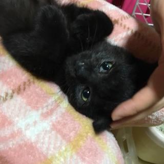 人も猫も大好きな構って黒くん