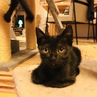 7兄弟のかわいい黒猫ちゃん