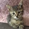 生後2ヶ月の猫の里親募集