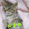 そっくり!抱っこ好きなかわいいキジトラ3兄妹 サムネイル3