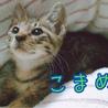 そっくり!抱っこ好きなかわいいキジトラ3兄妹 サムネイル2