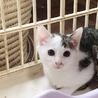 サバシロの子猫ちゃんです