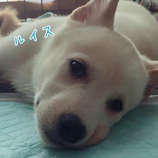 ルイスくん ☆ 4ヶ月