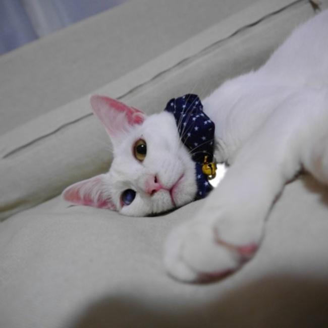 nana_76のカバー写真