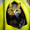 [御蔵島 森ネコ] お姉さん的存在の黒猫 キキ♀ サムネイル2