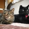 [御蔵島 森ネコ] お姉さん的存在の黒猫 キキ♀ サムネイル3