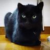 [御蔵島 森ネコ] お姉さん的存在の黒猫 キキ♀ サムネイル4