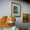[御蔵島 森ネコ] 性格穏やか茶トラ ゴールド♂ サムネイル4