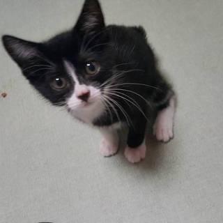 白黒の子猫☆ひじき