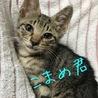 そっくり!抱っこ好きなかわいいキジトラ3兄妹 サムネイル5