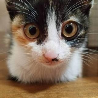 1ヶ月ほどの三毛猫です