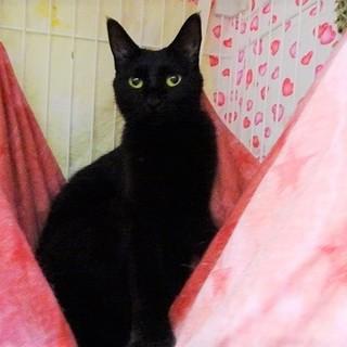☆難しい子が多い黒猫☆動画あり