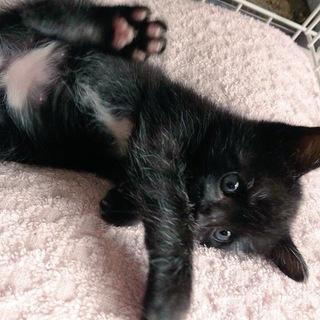 お腹の白い黒猫うにちゃん