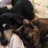 ジュリとキキ ジュリアは自分が猫だとずっと信じてたね・・ 実はあなたは犬なのよ