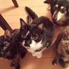 左からちーちゃん、パンちゃん、キキちゃん、ジュリちゃん。 ママそのお刺身ちょうだいよ・・・