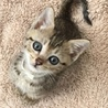 Barb_Foster_Kitten