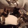 手前からパンダ、キキ、右がリンナ、奥がちーちゃん、1番上にメイプル