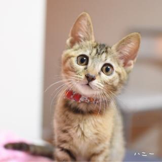 瞳の大きな美猫【ハニー】