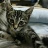 猫懐き抜群!ハピ♪ 3ヶ月