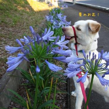 季節のお花と