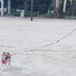 ころころ走る子犬の可愛さよ