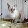 成猫さんご希望の方へ7匹の猫たち サムネイル5