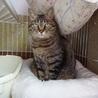 成猫さんご希望の方へ7匹の猫たち サムネイル6