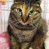 成猫さんご希望の方へ7匹の猫たち サムネイル7