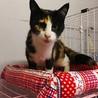 エイズキャリア猫さんも幸せ探してあげたいです サムネイル2