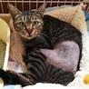 エイズキャリア猫さんも幸せ探してあげたいです サムネイル4