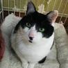 エイズキャリア猫さんも幸せ探してあげたいです サムネイル5