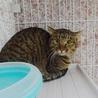 成猫さんご希望の方へ7匹の猫たち サムネイル3