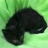 ふわふわ柔らかな黒猫オルビ君 サムネイル2