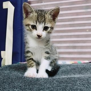 野良子猫①