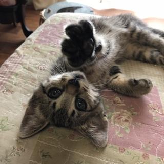 子猫の飼い主さん募集中です!