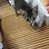子猫の飼い主さん募集中です! サムネイル3