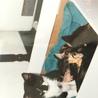 19年前鹿児島で拾ったパンダ達。翌日タオルの下は蚤の幼虫だらけ朝一で獣医さんに駆け込んだ