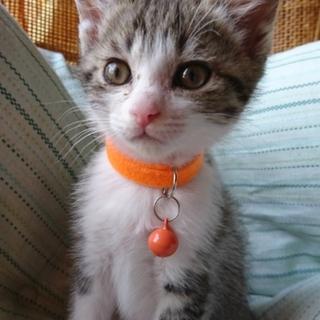野良子猫保護してます。オレンジちゃん
