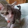 野良子猫保護してます。オレンジちゃん サムネイル3