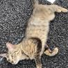 甘えん坊のメス猫ちゃん サムネイル4