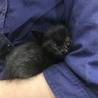 風邪っぴきでも可愛い黒猫です! サムネイル4
